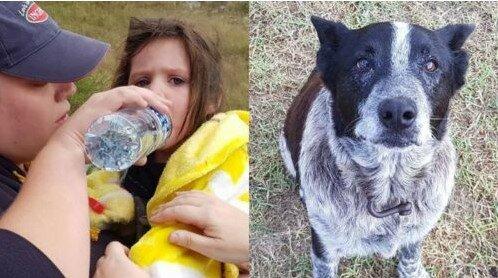Pohřešovanou dívku hlídal nevidomý pes 17 hodin