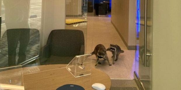 Do banky se dostali dva maskovaní lupiči, ale pracovníci banky je stejně poznali