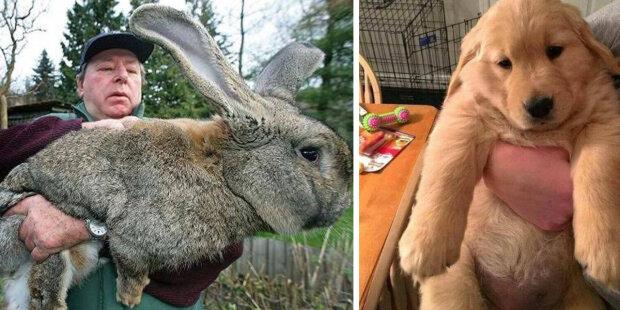 Největší zvířata: Člověk vedle nich vypadá jako brouček