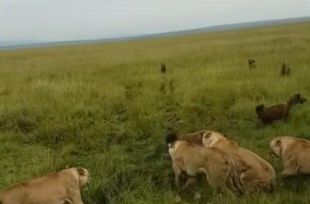 Zvířata. Foto: snímek obrazovky YouTube