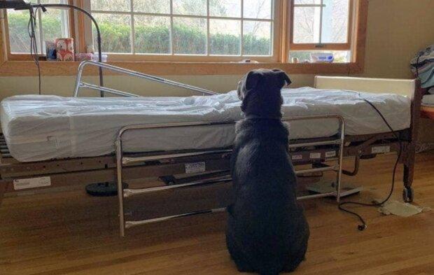 Věrný pes čekal na majitele vedle nemocničního lůžka, aniž by si uvědomil, že už není naživu