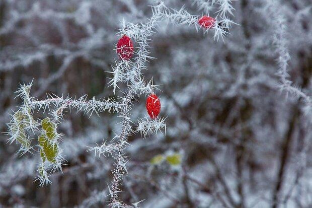Počasí o víkendu: Meteorologové uvedli, jaké bude počasí v posledním předvánočním víkendu