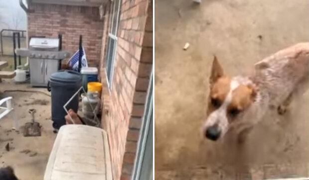 Muž si vzal domů psa, kterého našel v noci na ulici: ráno začal pes vydávat podivné zvuky a nevypadal jako pes