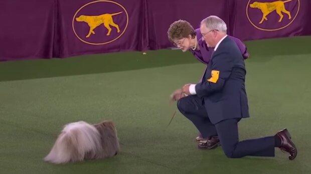 Pes. Foto: snímek obrazovky YouTube