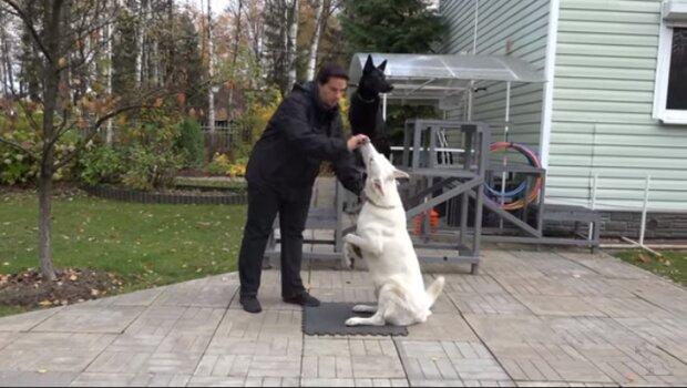 Výcvikové metody založené na trestech vedou psy ke stresu: výsledky výzkumu