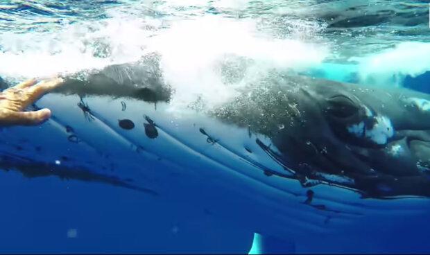 """""""Včasná pomoc"""": obrovská velryba tlačila ženu nosem, protože zachraňovala před děsivější šelmou"""