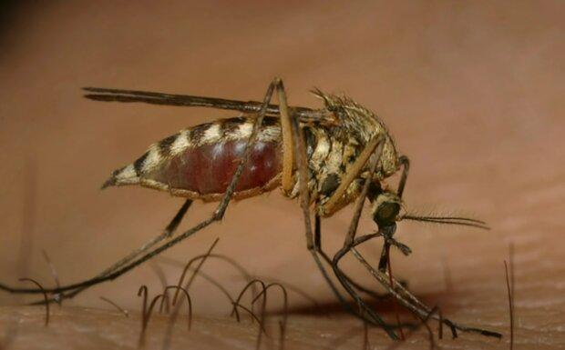 Komáři. Foto: snímek obrazovky YouTube