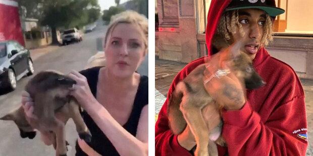 Neznámá žena předala štěně chlapovi a utekla: jak se má pejsek teď