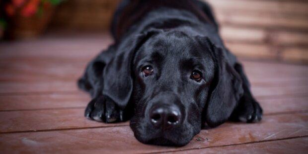 Jmenována deset plemen psů, která jsou nejvíc schopná k drezírování