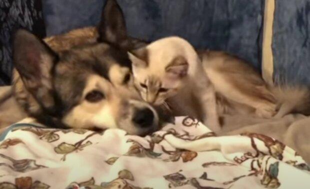 Pes a kotě. Foto: snímek obrazovky YouTube