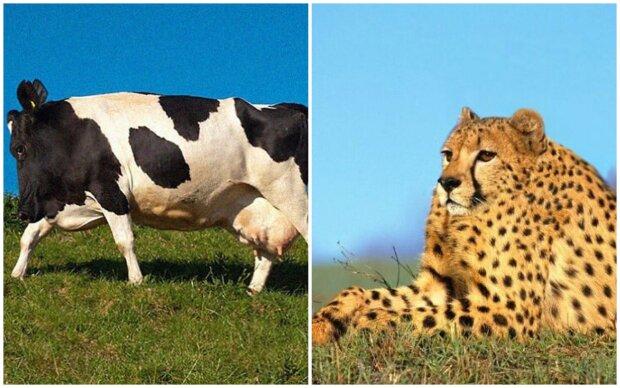 Jak vypadají zvířata bez krku: výběr vtipných a roztomilých fotografií