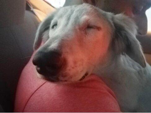 Chlap našel pod autem vyděšené štěně a odnesl si ho domů