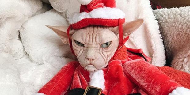 Těsný klobouk, ošklivý plnovous, bubončík: Zvířata nejsou spokojená se svými vánočními kostýmy