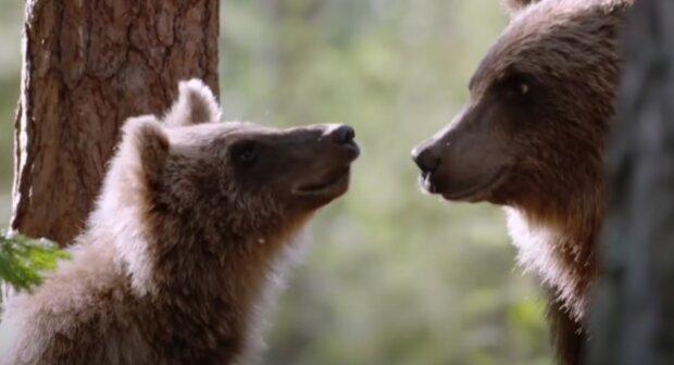 Medvěd. Foto: snímek obrazovky YouTube