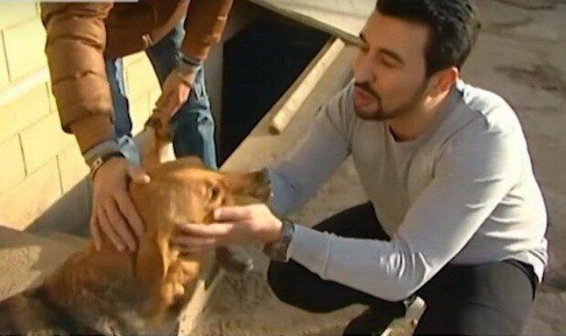 Chlap nachází pouliční psy a jim pomáhá začít nový život