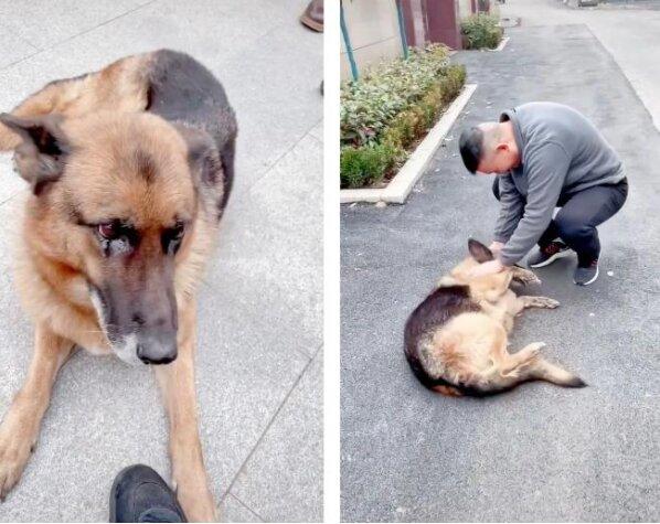 """Kynolog přišel navštívit psa, který už je """"v důchodu"""" a se kterým pracoval osm let"""