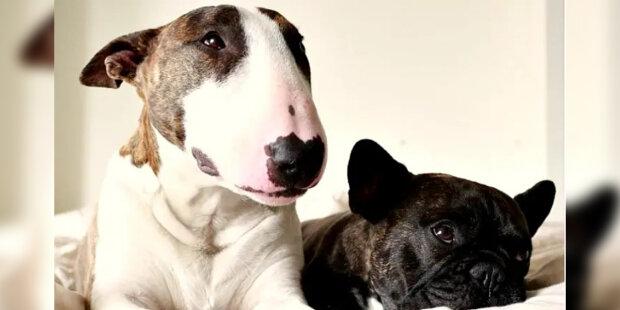 Pes Marka Jacobse má na sociálních sítích vlastní stránku: Stylové fotografie psa