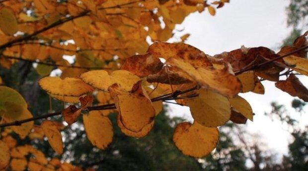 Podzimní počasí v Česku. Je známo, na jaké počasí se můžeme těšit