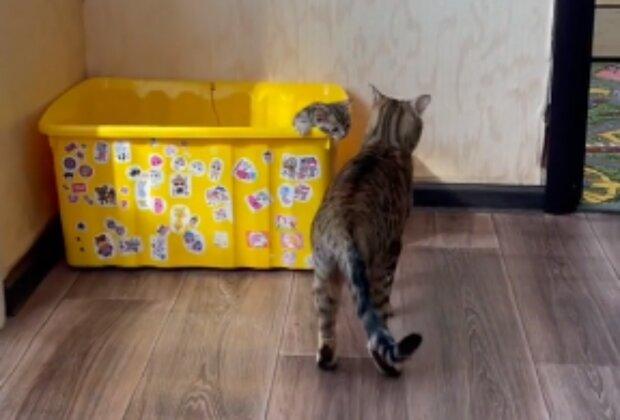 Kočka. Foto: snímek obrazovky TikTok