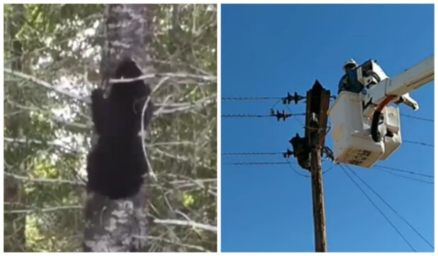 Záchrana medvědů uvězněných na stožárech. Foto: snímek obrazovky YouTube