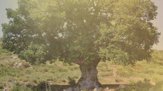 """Proč byly nemocné děti zahnány do dutin stromů: """"léčba"""", která pomáhá léčit dítě, která existovala až do počátku 20. století"""