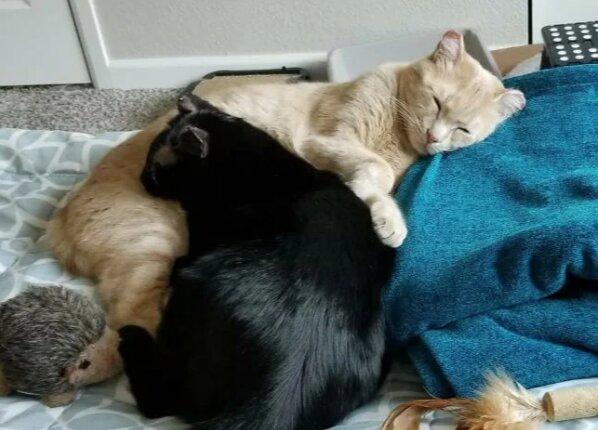 Zamilovaný kočičí pár prošel ztrátou svého domova a majitelů, požárem, tahem, ale to jen posílilo jejich lásku