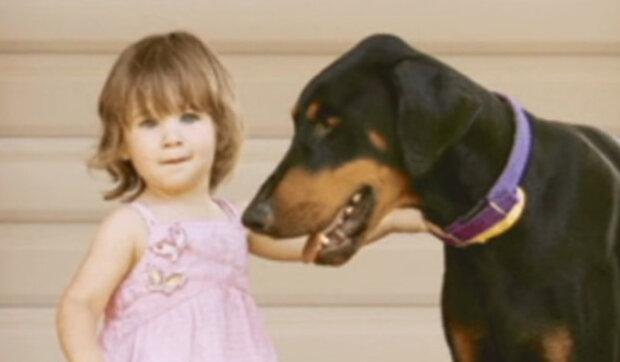 Dobrman chytil roční holčičku za pleny a přehodil ji přes sebe: Maminka běžela na pomoc dceři. Proč pes takto reagoval