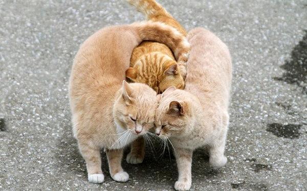 Zamilovaná zvířata: roztomilé obrázky z celého světa