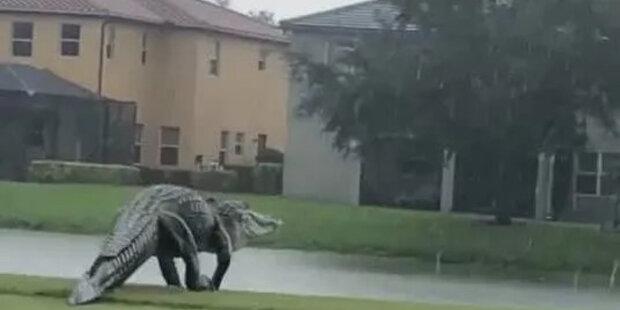 Na Floridě se velký aligátor procházel golfovým hřištěm: kam šel plaz