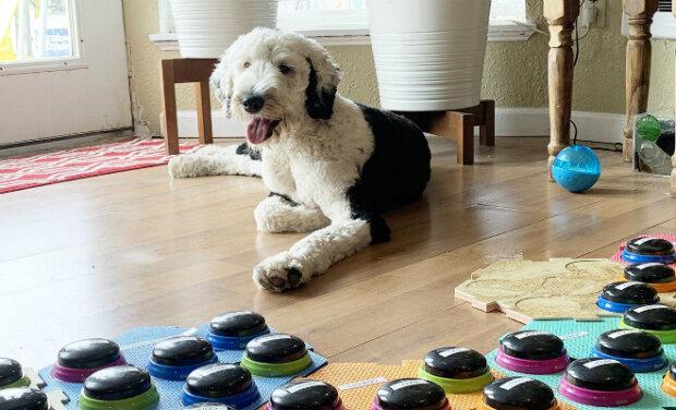 Pes se naučil mluvit s majitelkou pomocí tlačítek se slovy. Dnes už zná 50 slov a stále učí nová