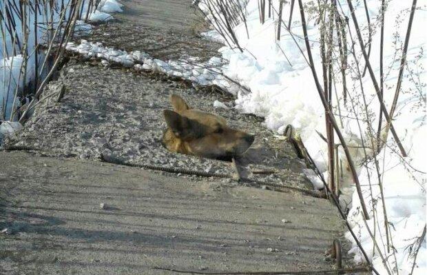 Jedna hlava trčela z betonu: záchranáři uviděli psa, který se ocitl v pasti