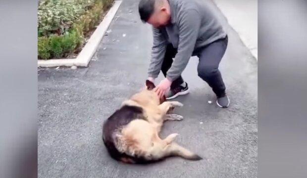 Muž a pes. Foto: snímek obrazovky YouTube