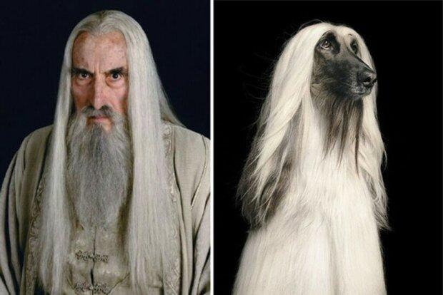 """Jak by vypadal film """"Pán prstenů"""", kdyby v něm všechny role hrály psy"""