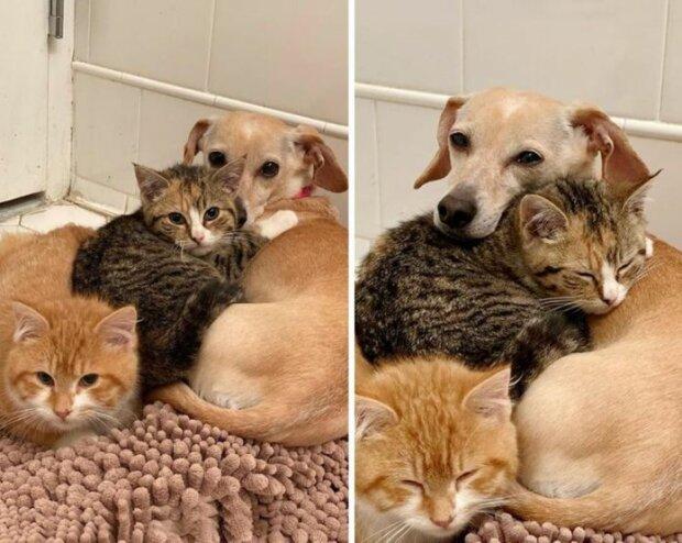 """Jak si fenka """"adoptovala"""" toulavá koťata a naučila je být odvážnými"""