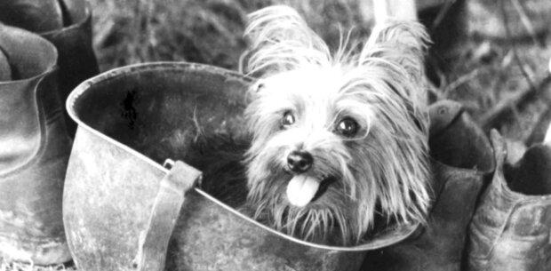 """""""Živé hračky"""": slavná a prastará historie malých dekorativních psů"""