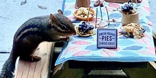 """""""Vypadá jako malý mužíček"""": restaurační kritik vytvořil kavárnu pro veverky"""