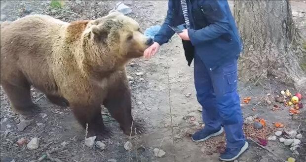 """""""Malý a osamělý, přišel k nám"""": jak nyní žije medvěd, kterého našli před pěti lety na letišti"""