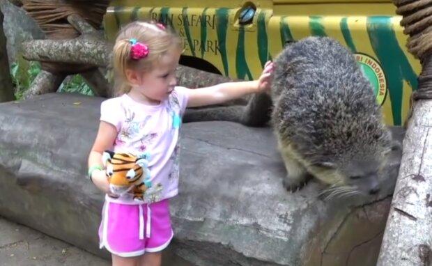 Zoo. Foto: snímek obrazovky YouTube