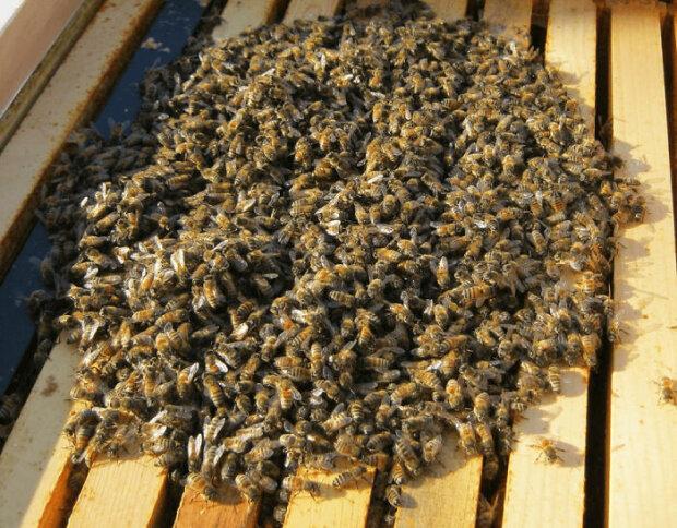 Včelař vysvětluje, co včely dělají během zimních měsíců, a to není to, co většina lidí myslí