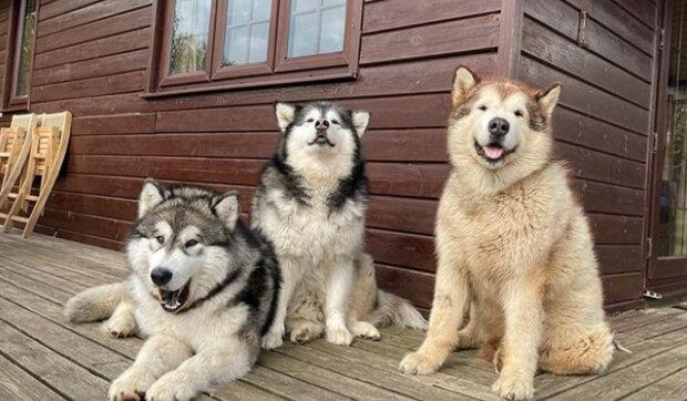 """Odborníci řekli, co se stane se psy, pokud jim řeknete """"Miluji tě"""" : podrobnosti o pozorování dodají víru každému majiteli psa"""