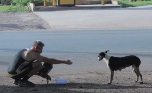 The Man That Rescues Dogs. Foto: snímek obrazovky YouTube