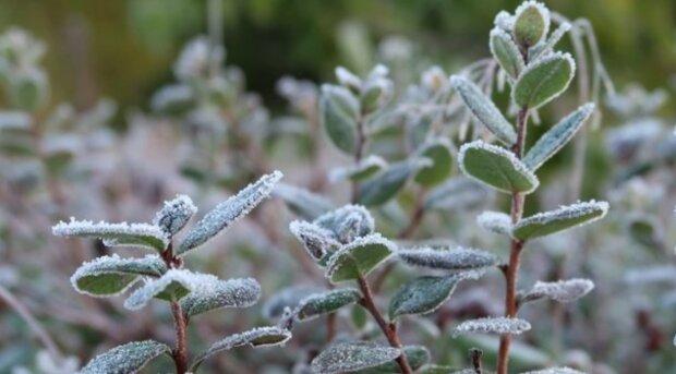 Mrazy a teploty pod nulu: Je známo, jaké počasí bude o víkendu
