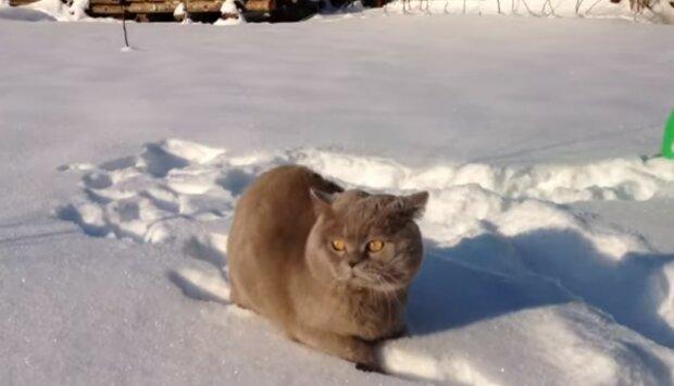 """""""Jak ses sem dostala"""": Proč horolezci vysoko v horách našli kočku"""