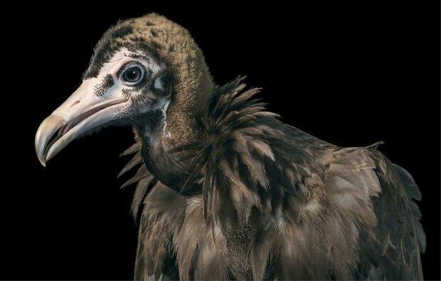 """""""Fotografie na pas"""": fotograf pořídil fotografie vzácných ptáků, jako by to byli lidé"""