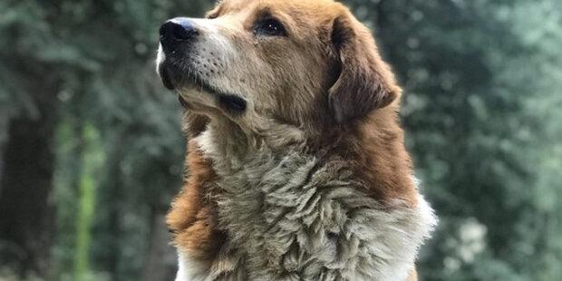 """""""Jako by věděl, že se ztratíme"""": pes přivedl ztracené turisty do tábora v horách"""