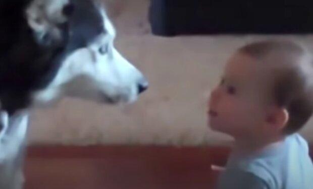 Pes a holčička. Foto: snímek obrazovky YouTube