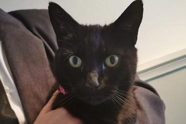 """""""Vzali jsme ji na třetí narozeniny našeho nejstaršího syna"""": Milovaná kočka se vrátila poté, co si rodina byla jistá, že se s ním navždy rozloučila"""