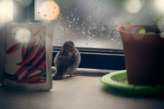 Příběh vrabčího mládě a lidské laskavosti
