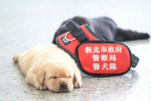 Tchajwanská policie přijala nejroztomilejší čtyřnohé důstojníky na světě. Fotky branců nikdy nezpůsobovaly tolik úsměvů