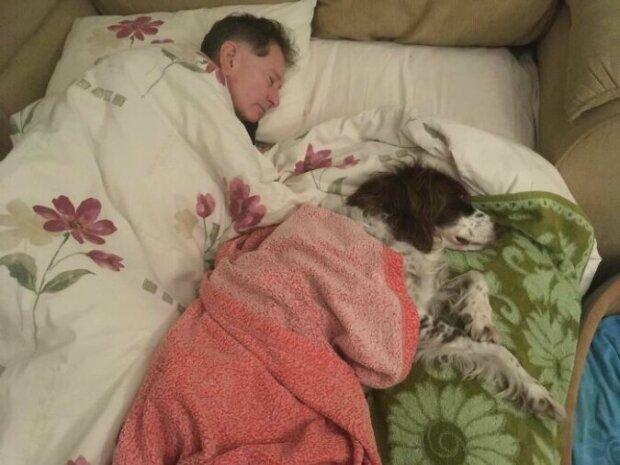 Majitelé po pořádku spí na gauči se starým psem, aby se necítil osamělý